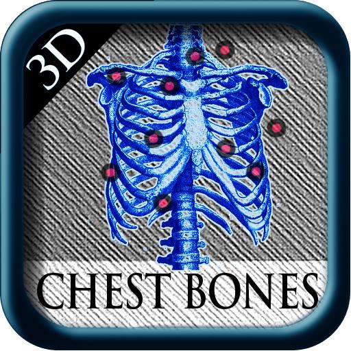3D Chest Bones
