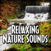 Gentle Stream to Help You Sleep With Nature Sound - Relax Meditate Sleep
