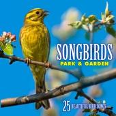 Songbirds: Park & Garden (Over 25 Beautiful Bird Songs & Sounds)
