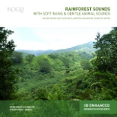 Rainforest Sounds With Soft Rains & Gentle Animal Sounds (Nature Sounds, Deep Sleep Music, Meditation, Relaxation, Sounds of Nature)