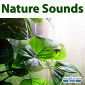 Ocean Sounds - Sounds of Nature