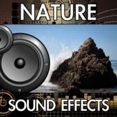 Wind Gust (Version 2) [Sound Effect]