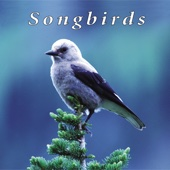 Mountain Songbirds