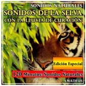 Sonidos de la Selva Con la Lluvia de Curación: Sonidos Naturales: Edición Especial