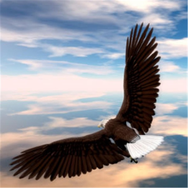 White Soaring Eagle