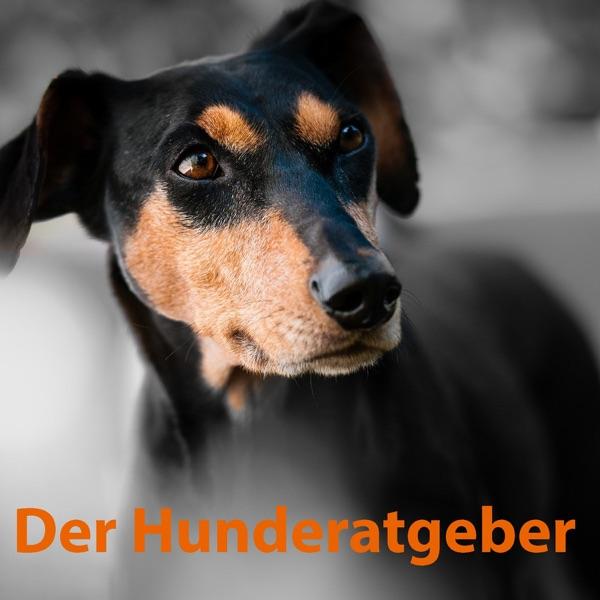 Dreamdoggy-Informationen über Hundehaltung (inspiriert durch Martin Rütter und Cesar Millan)