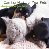 Calming Music for Your Pets When You Are Far from Home – Music Therapy for Anxious Dogs, to Deal with Dog Separation Anxiety
