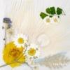 6. WHITE NIGHT -KR EDITION- - SOL (from BIGBANG)