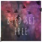 Northern Lights - Bird Set Free bild