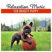 Relaxation Music for Anxiety Puppy - Soothing Music for Lonely Dogs, Calm Sleep, Harmony & Balance, Total Comfort, Calm Atmosphere