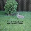 Steve the Urban Rabbit (The Song) - Single
