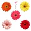 花は咲く - EP