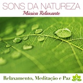 Sons da Natureza e Relaxamento: 101 Relaxamento Musicas de Fundo, Meditação, Musicas para Meditar, Musicas para Dormir, Musicoterapia, Joga, Massagens Relaxantes e Serenidade