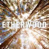 Etherwood - Souls Apart  artwork