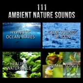 111 Ambient Nature Sounds: Best Relaxing Music, Hypnotic Ocean Waves, Calm Sounds of Rain, White Noise, Healing Waterfalls and Animal Songs to Reduce Stress