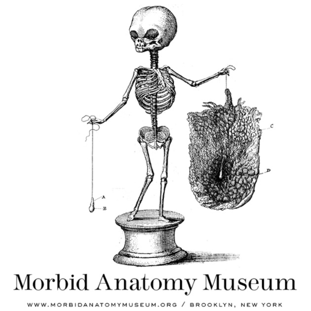 What is morbid anatomy