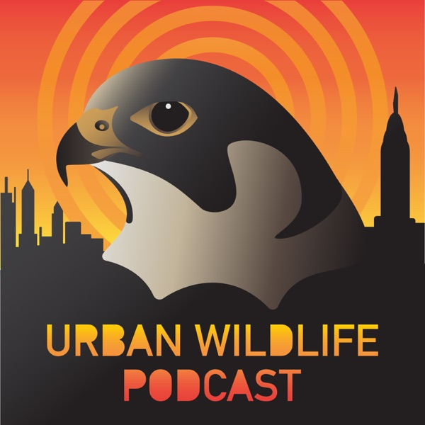 Urban Wildlife Podcast