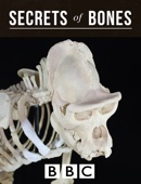 BBC Secrets of Bones