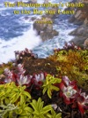 The Photographers Guide To The Big Sur Coast