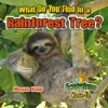 What Do You Find In A Rainforest Tree