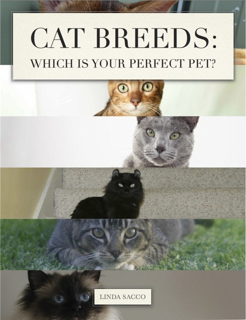 Cat Breed Compatibility With Each Other