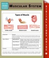 Muscular System Speedy Study Guides