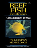 Reef Fish Identification - Florida Caribbean Bahamas