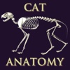 Bryan Edwards Cat Anatomy Flash Cards