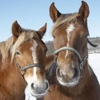 Horse Tap Puzzles - Free for iPad