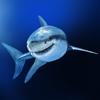 Haie der Welt HD