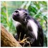 tap puzzle - Monkey edition