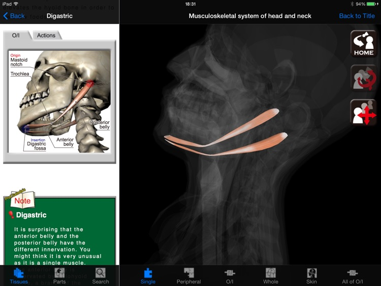 DS ANATOMY HEAD & NECK by Digital Solutions Inc
