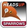 birdJam HeadsUp Sparrows