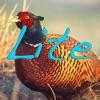 British Birds Lite