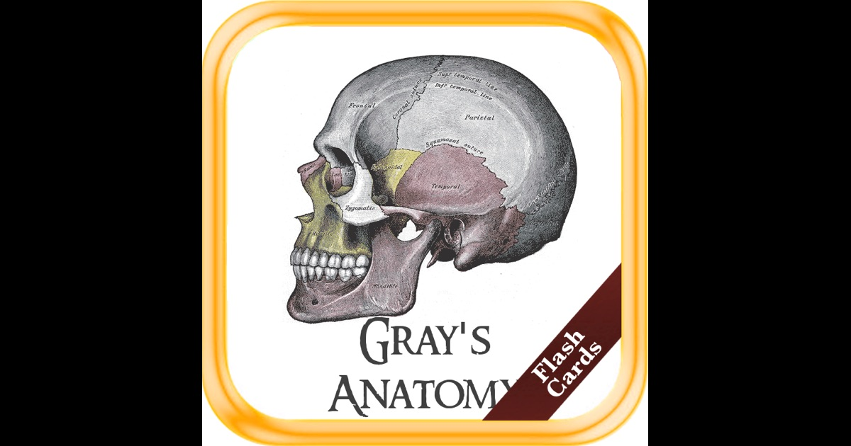 Grays anatomy flash cards