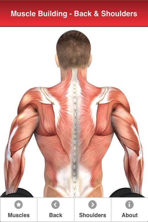 Back & Shoulders: Muscle Building with Craig Ramsay by iGlimpse Limited