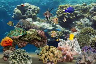 MyReef 3D Aquarium Screenshot 1