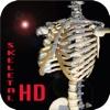 Skeletal Anatomy.