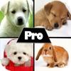 Cute HD Wallpapers Pro