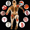 Principles of Anatomy and Physiology for iPhone