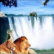 Kingdom Animal icon