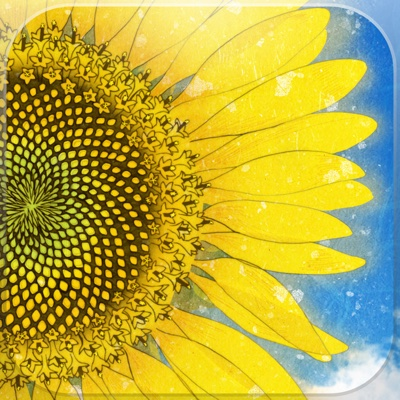 essay on the sunflower Essays on simon wiesenthal the sunflower on the possibilities and limits of forgiveness.