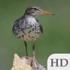 Birds of Canada Guide HD