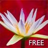 Yoga Virtuoso Free with Lyndon: Move, Stretch, Dance