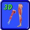 3D Human UpperLimb And Leg_Muscle HD