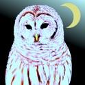 owlcamera icon