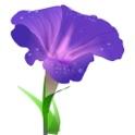 Wild Flowers Of Britain icon