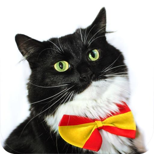 Cat Spanish by CatAcademy
