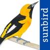 All Birds Ecuador - a complete field guide to all the bird species recorded in Ecuador ecuador newspapers