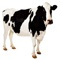 download Cow Sound Effects, Ringtones, and Alarms from the Farm to You